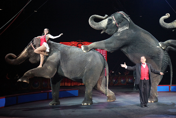 Habib and Michelle will dazzle you with the largest stars of the circus!